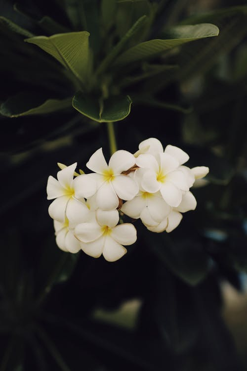 Blossoming white flowers growing on plants with green leaves in daylight in nature