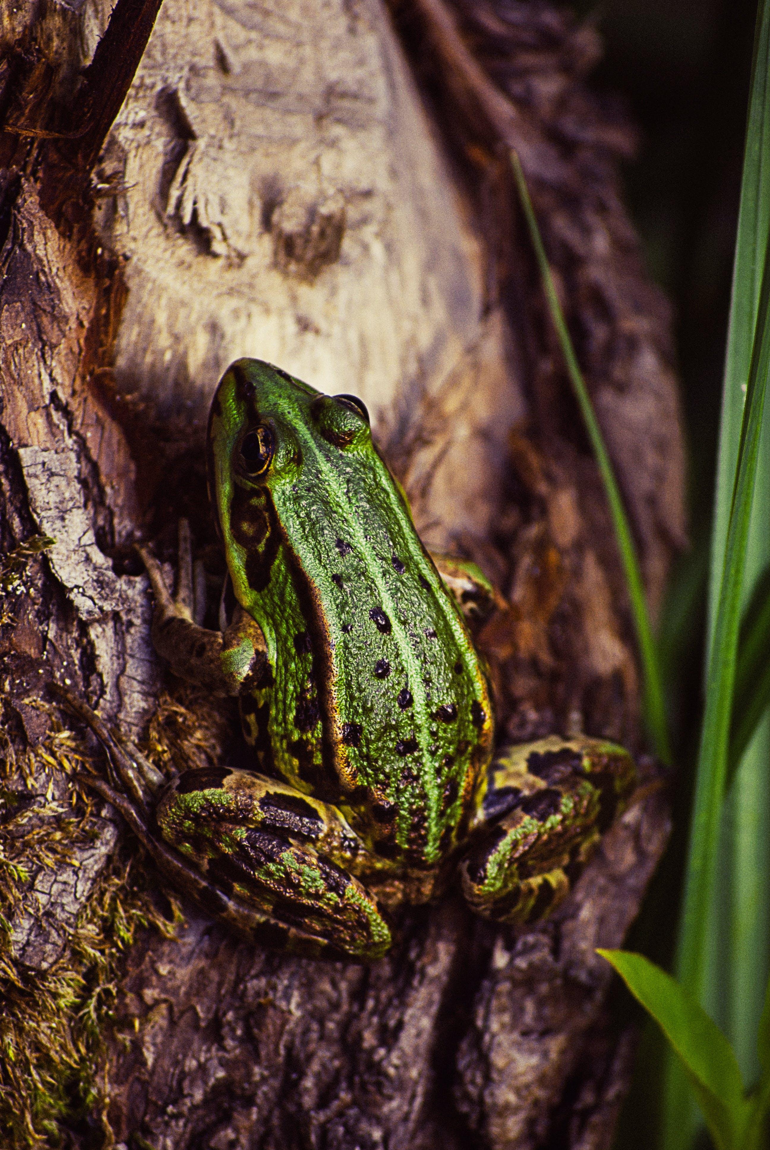 Green Frog Beside Plant