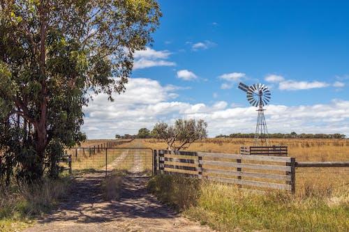 Immagine gratuita di albero, campi, cielo azzurro