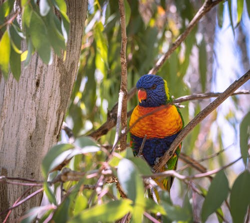 Immagine gratuita di ala, albero, animale