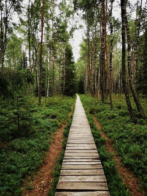 Foto d'estoc gratuïta de a l'aire lliure, arbres, bosc