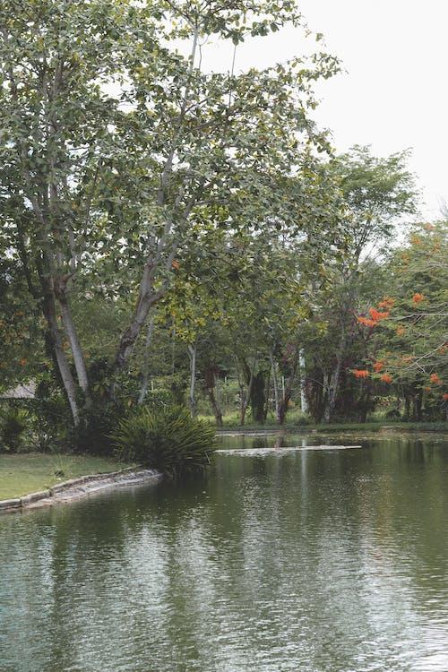 açık, açık hava, ağaçlar içeren Ücretsiz stok fotoğraf
