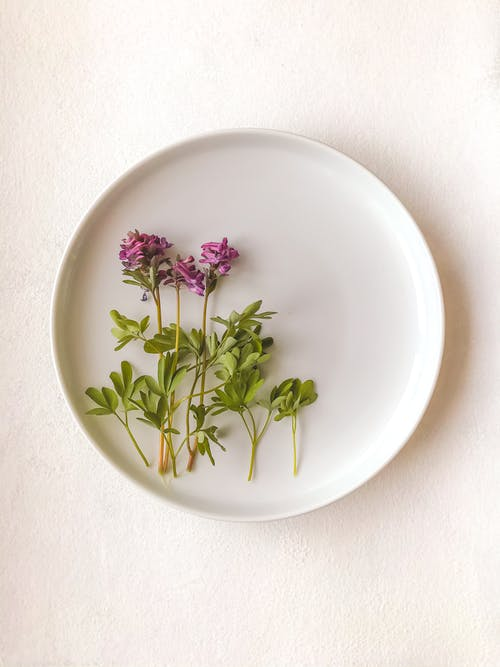 Pink and Green Flower on White Ceramic Round Plate