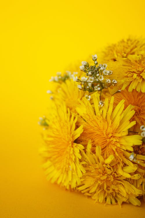 A Bouquet of Yellow Flowers