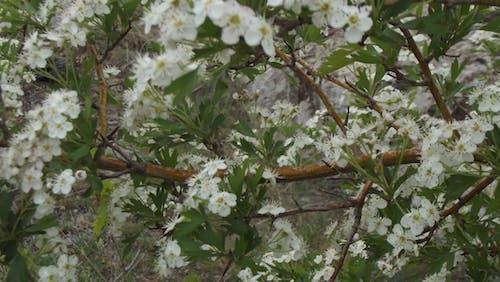 春の無料の写真素材