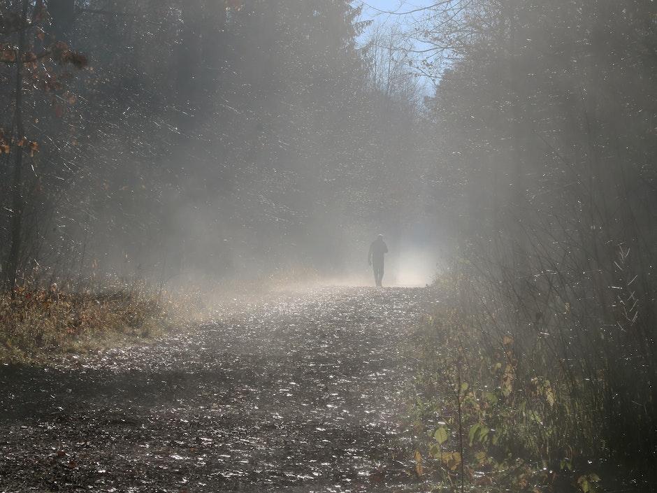 fog, forest, grass