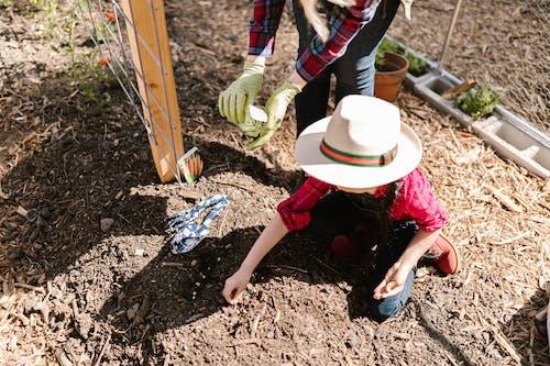Fotos de stock gratuitas de agricultor, agricultura, aprendiendo