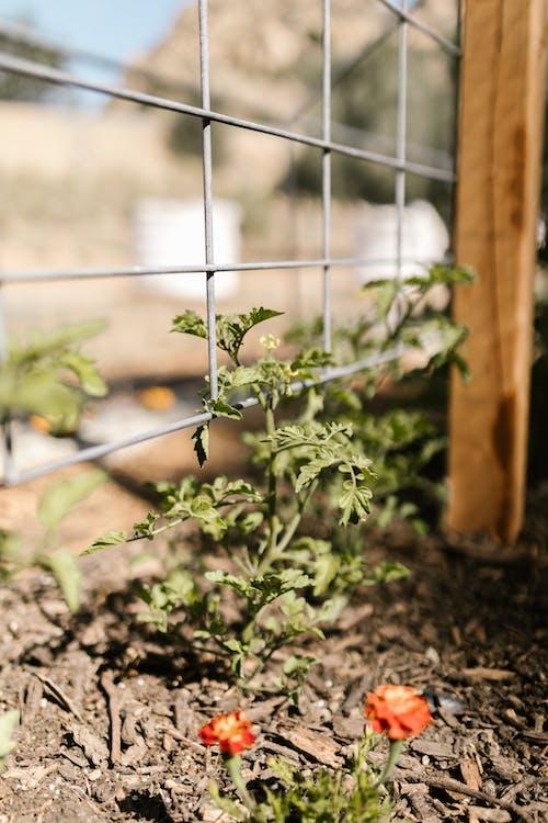 Fotos de stock gratuitas de agricultura, campo, crecimiento