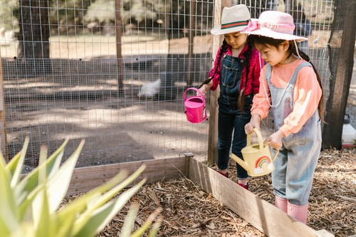 Two Young Girls Using Watering Cans for Gardening