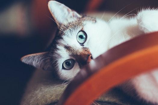 Free stock photo of animal, pet, cute, blur