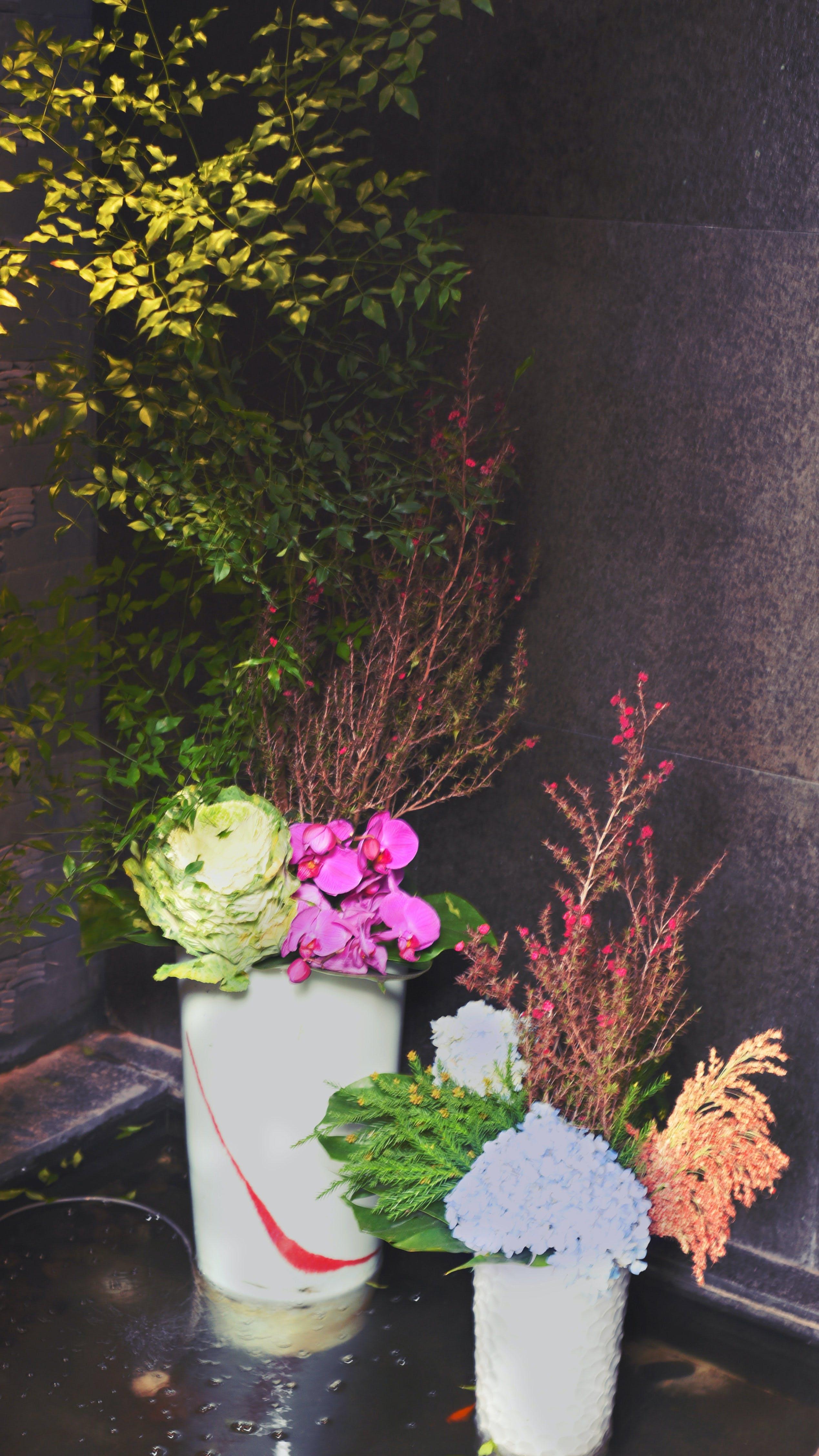Free stock photo of flower, corner