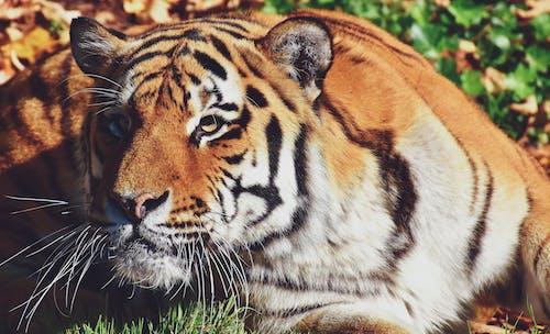 Gratis stockfoto met agressieve dispositie, boos, dieren in het wild