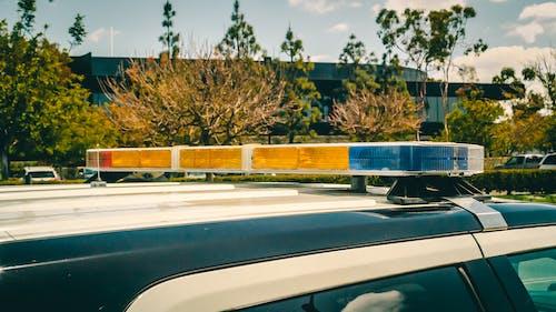 Photos gratuites de 911, arbre, arrête de bouger