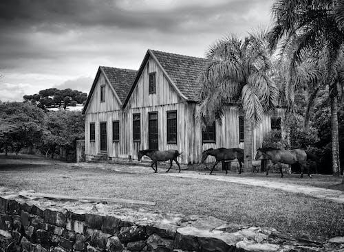 Grayscale Photo of Horses Near House