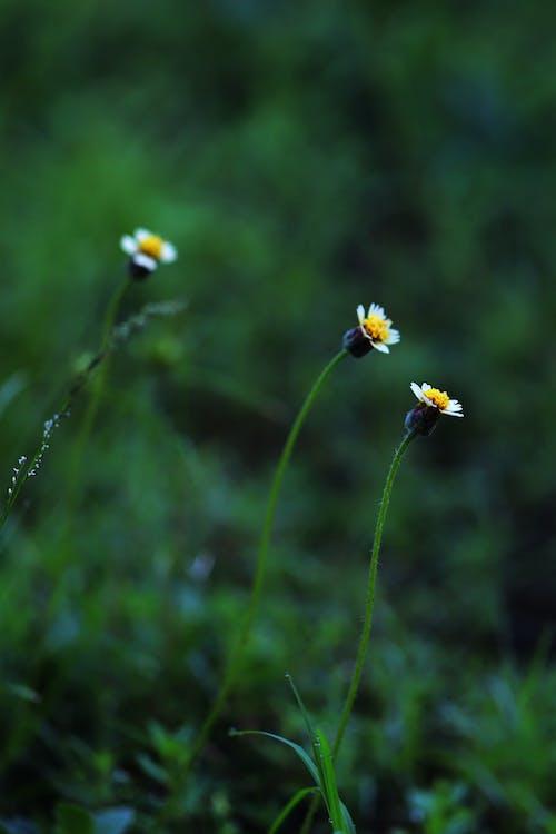 Free stock photo of flowers, grass, green grass