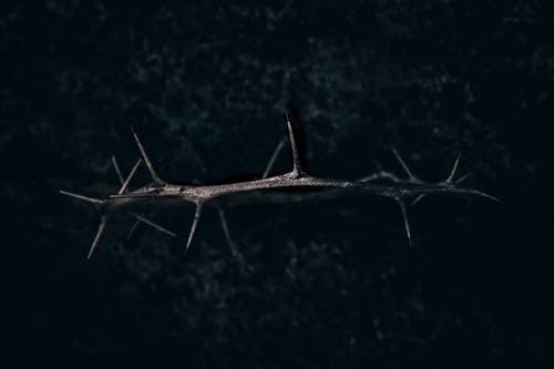 Free stock photo of Crown of thorns