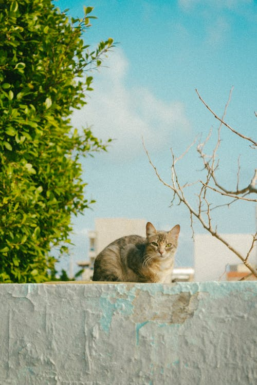 Brown Tabby Cat on Gray Concrete Wall