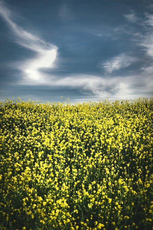 açık hava, alan, arazi içeren Ücretsiz stok fotoğraf
