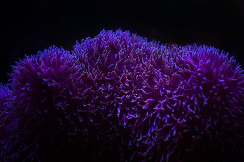 Picturesque view of vivid corals growing on rough surface on bottom of sea on black background