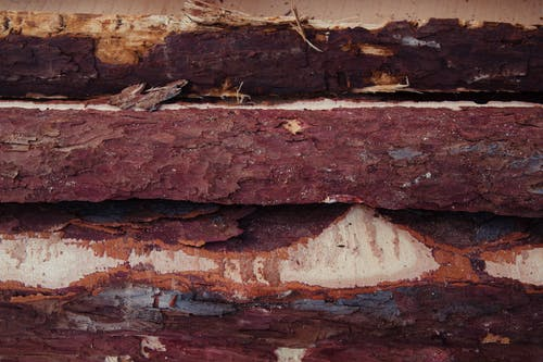 Bark of a Processed Lumber Woods