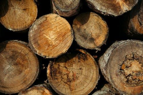 Immagine gratuita di boschi tritati, primo piano, registri