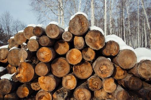 Immagine gratuita di boschi tritati, catasta di legna, primo piano