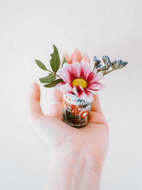 Pink and White Flower on Persons Hand
