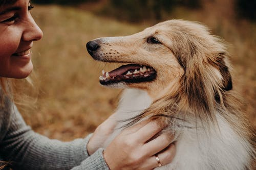 Glad adult female owner smiling and caressing obedient Collie dog in autumn meadow