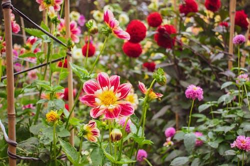 Fotos de stock gratuitas de de cerca, fauna, flor