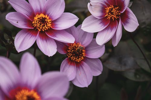 Fotos de stock gratuitas de abeja, amor, bonito