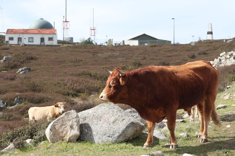 Free stock photo of animal, portugal