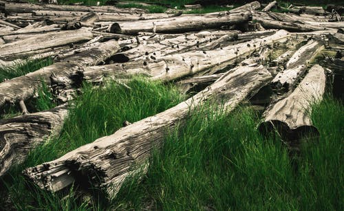 Kostenloses Stock Foto zu umgefallene bäume, yosemite, yosemite-tal