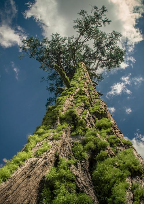 Kostenloses Stock Foto zu bäume wald, baumrinde, baumstamm