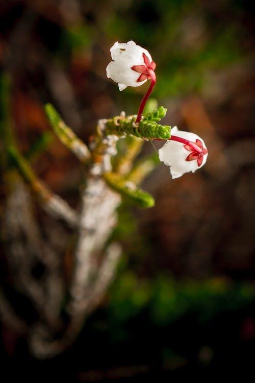 Kostenloses Stock Foto zu blumen, weiße blumen, yosemite