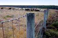 nature, gate, border