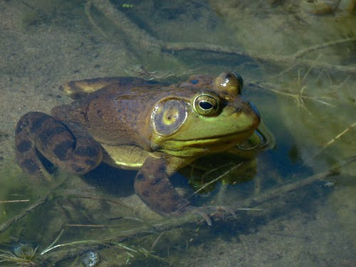 Close Up Photo Of Green Frog on Water