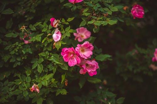Free stock photo of bloom, flower, flower bloom