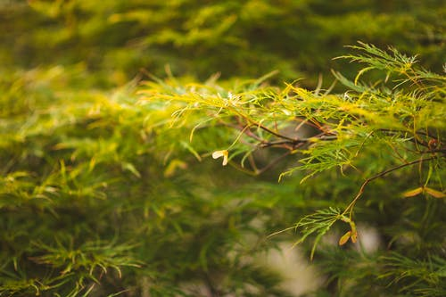 Free stock photo of close up, green, green nature