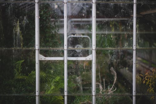 Free stock photo of glass, green house, window