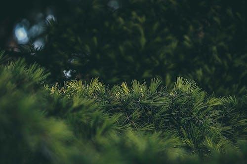 Безкоштовне стокове фото на тему «вічнозелений, Денне світло, Деревина»