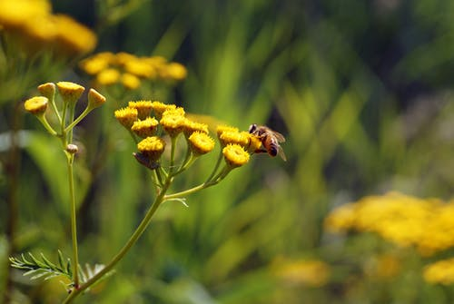 Kostenloses Stock Foto zu biene, blume, insekt, natur