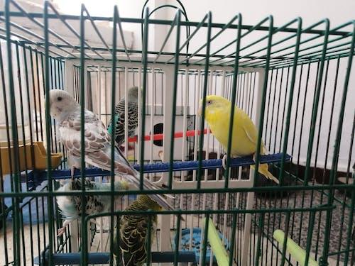 Photos gratuites de écailles d'oiseaux, oiseau de paradis, oiseaux