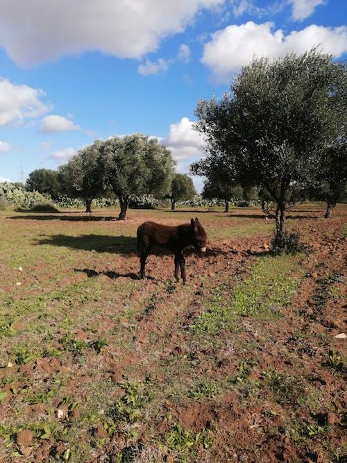 Photos gratuites de âne, bel âne, bel animal