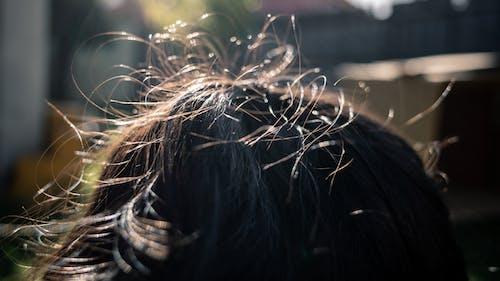 Free stock photo of hair, messy hair