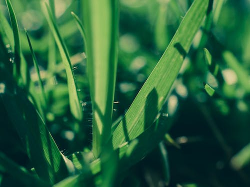 Free stock photo of grass, green