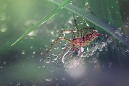 Free stock photo of arachnid, dew, lair