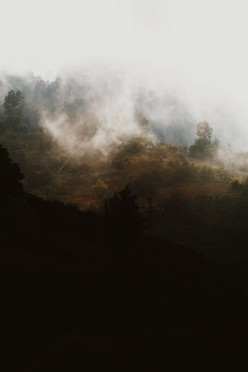 Fog over mountainous terrain with forest