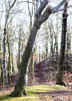 Kostenloses Stock Foto zu stadt, kurve, wald, gras