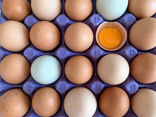 White Egg on Blue Egg Tray