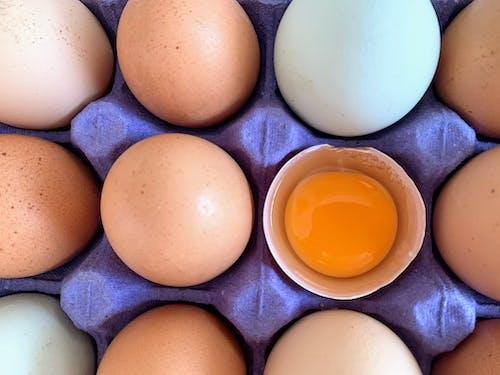 Brown Egg on Blue Ceramic Bowl